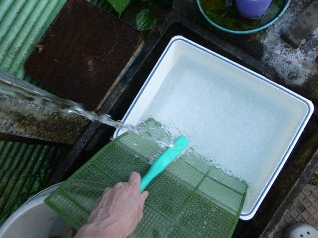 流水で洗剤成分を流す